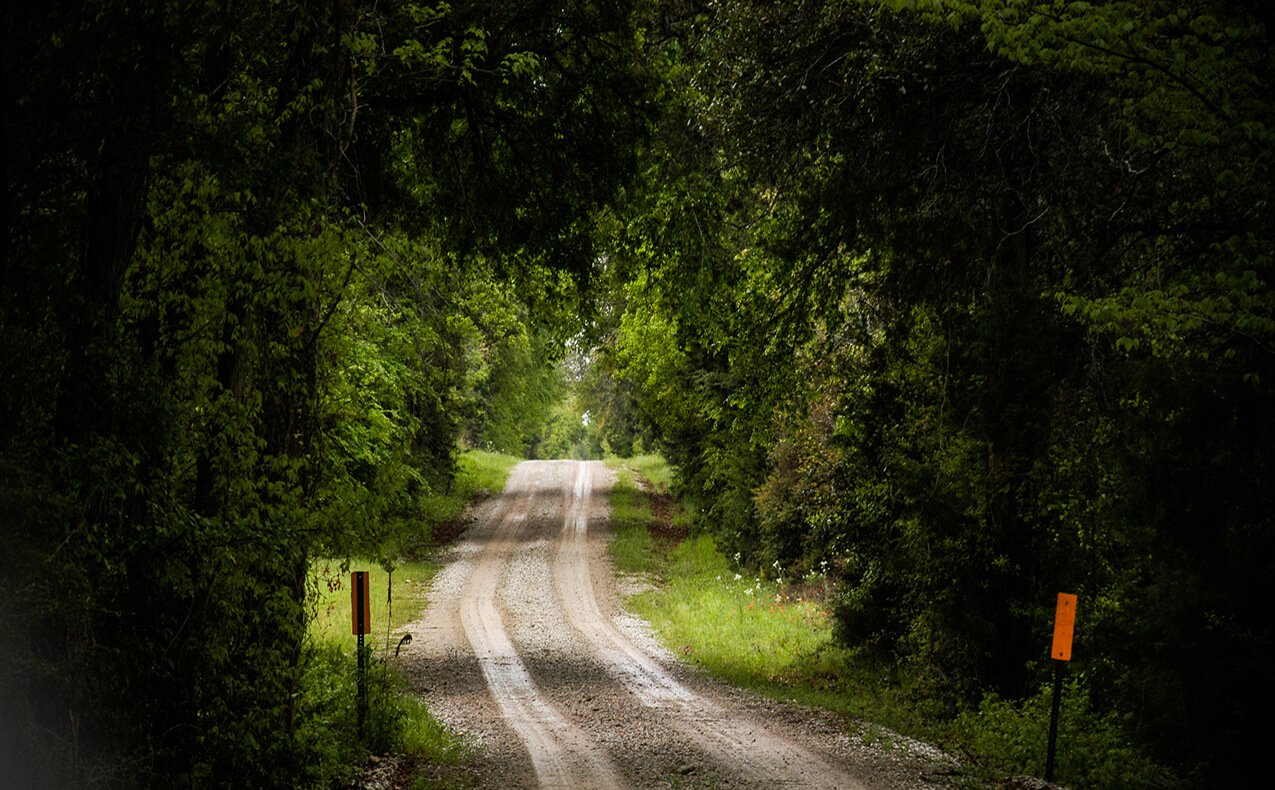 Road in a forest | BCR Realtors | Brazos Valley | TX Real Estate | TX Homes